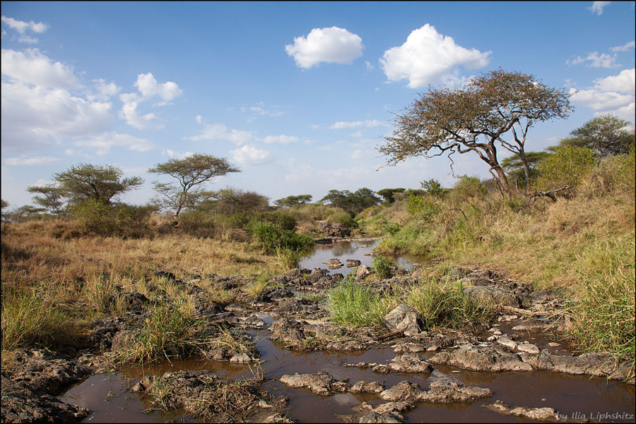 Landscapes of Serengeti №9