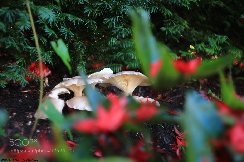 Photograph Autumn color by Vladimir Cheinman on 500px