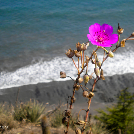 Flower and Sea, Nikon COOLPIX S220