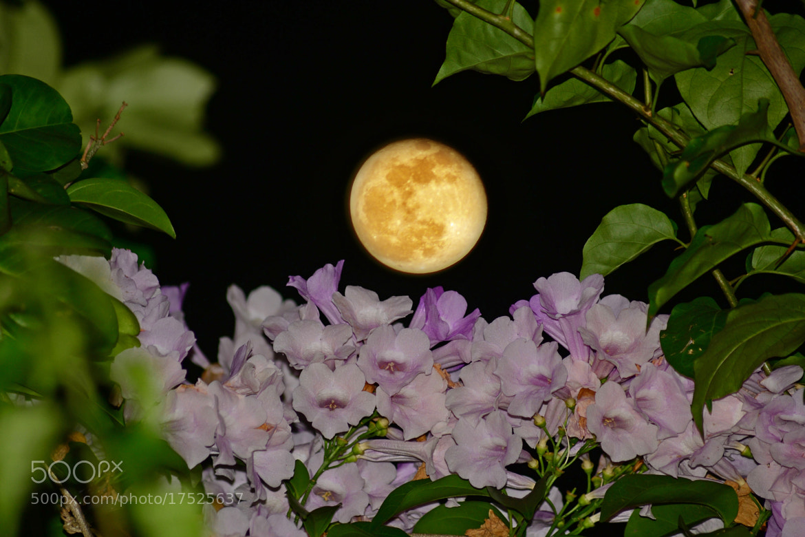 Photograph Waning Harvest Moon by Kristine Victoria on 500px