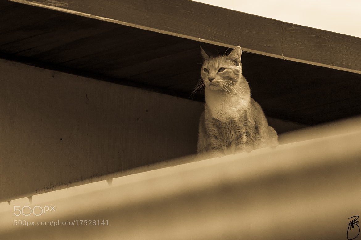 Photograph A cat on the roof... by Boris W. Blanco Meza on 500px