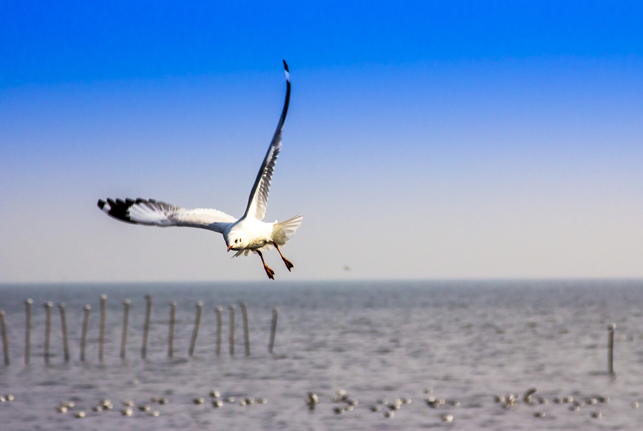 Photograph Stretching by Anne Hannah (Lwin) on 500px