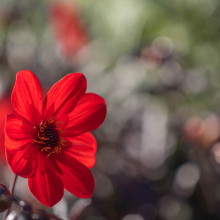 summer is ending, Canon EOS 760D, Canon EF 100mm f/2.8L Macro IS USM