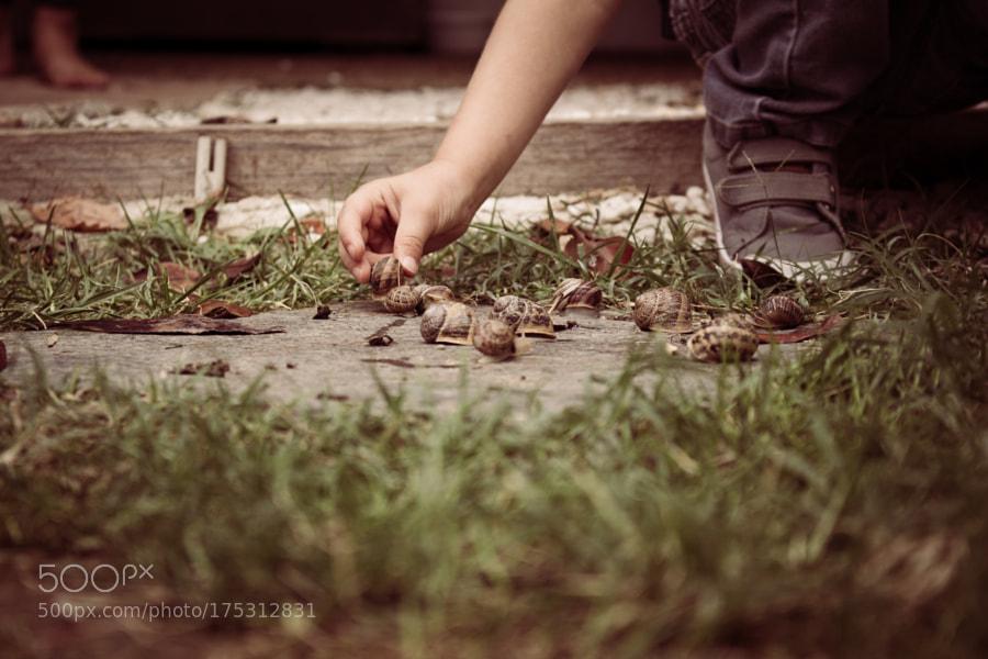line of snails