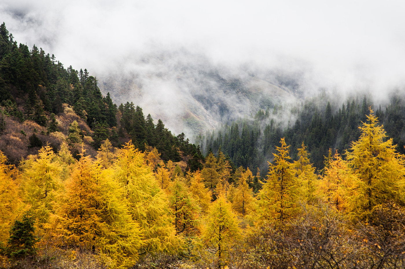 Photograph Autumn in mountains by Marina Sorokina on 500px