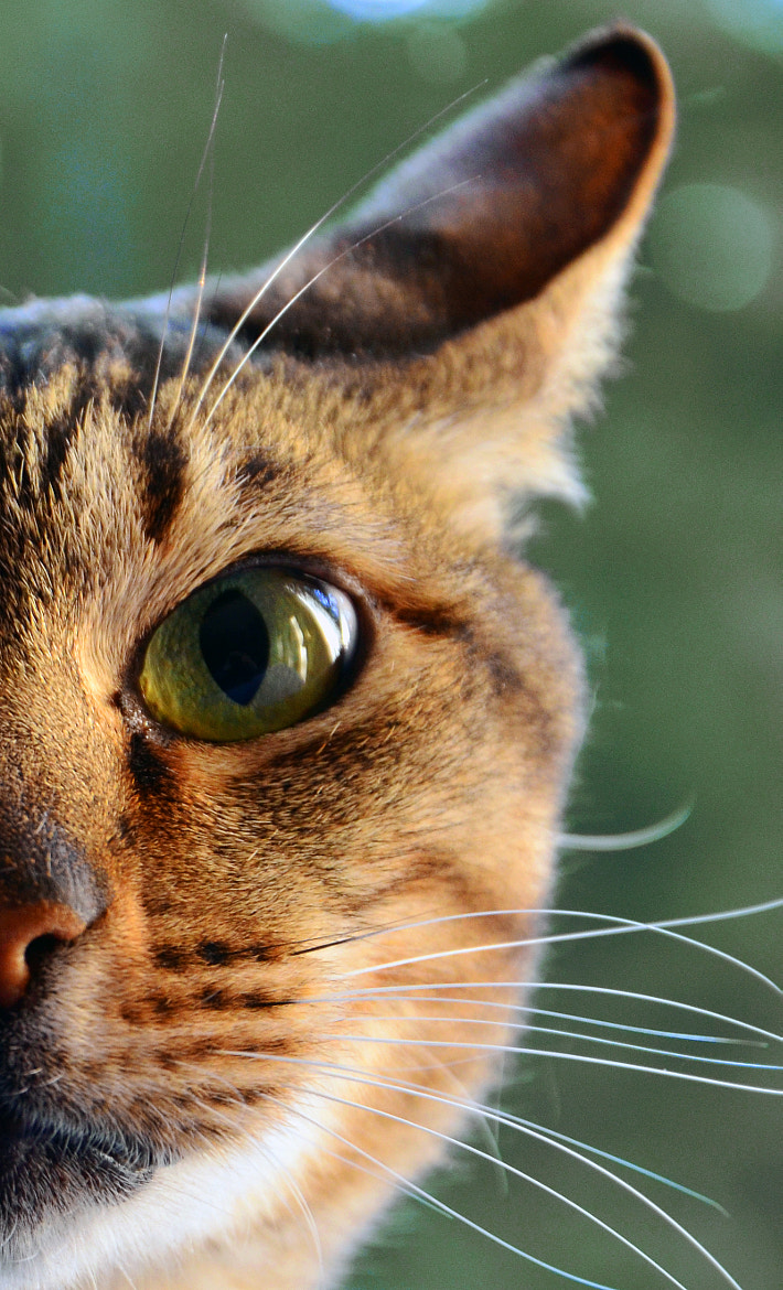 Photograph Cat Eye by Thomas Kennedy on 500px