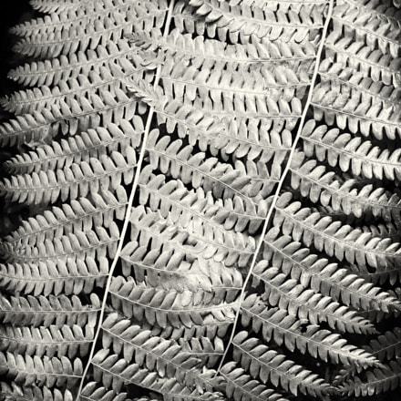Meshed ferns, Pentax K-30, smc PENTAX-DA 35mm F2.4 AL
