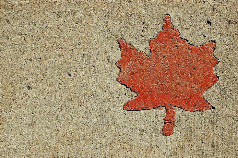 Photograph Canada by Alper Hayreter on 500px