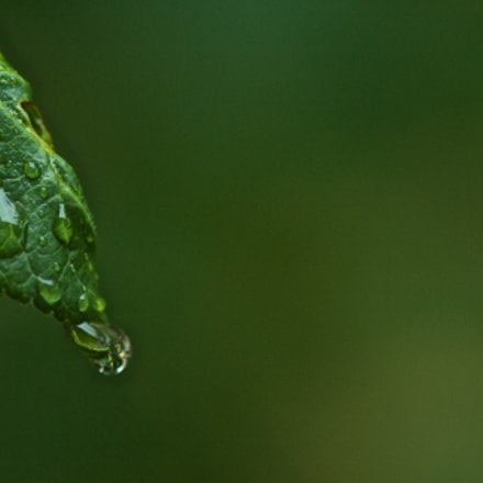 Water drops on tree, Canon EOS 1000D