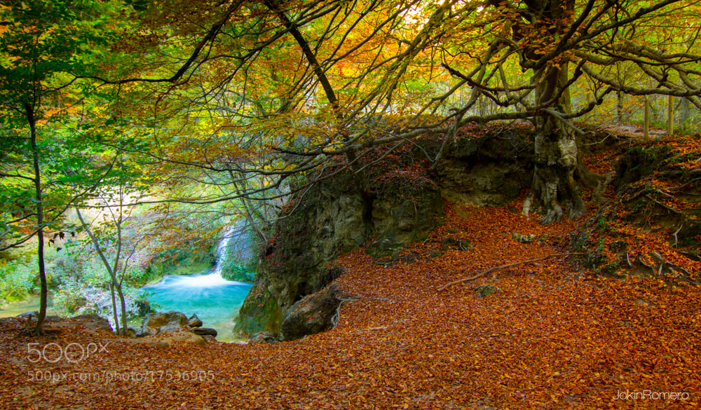 Photograph Colorful forest 2 by Jokin Romero on 500px