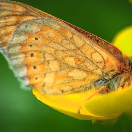 a butterfly closeup on, Canon EOS 600D, Canon EF 100mm f/2.8 Macro