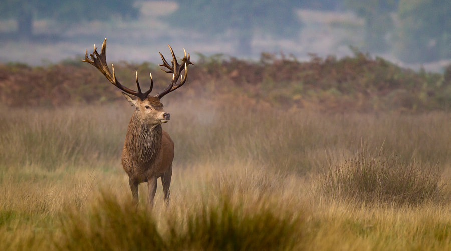 Stand by Mark Bridger
