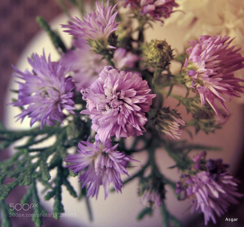 Photograph Purple beauty by Asgar Gullukhan on 500px