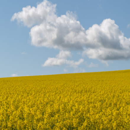 Fields of Gold, Canon EOS 70D, Tamron AF 18-270mm f/3.5-6.3 Di II VC LD Aspherical [IF] Macro