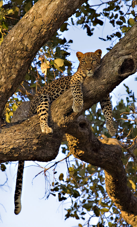 Taken in Kwando concession, Botswana, 13th March 2008.