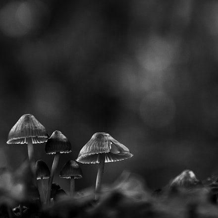 There come the mushrooms!, Canon EOS REBEL T1I, Sigma 18-200mm f/3.5-6.3 DC OS HSM [II]