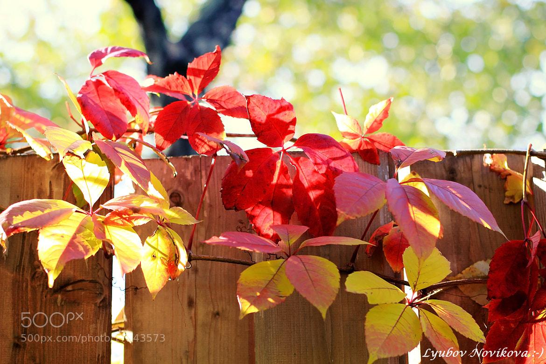 Photograph Autumn colors by Lyubov Novikova on 500px