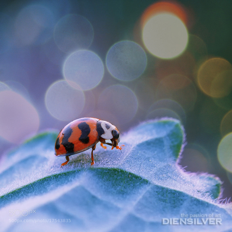 Photograph In heaven by Diens Silver on 500px