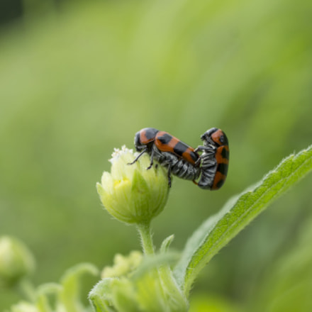 fly, Canon EOS 1100D, Canon EF-S 18-55mm f/3.5-5.6 III