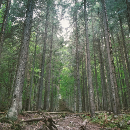 forest, Canon EOS 550D, Canon EF 24mm f/1.4L II