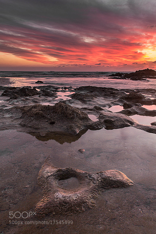 Photograph Fire by shir cohen on 500px