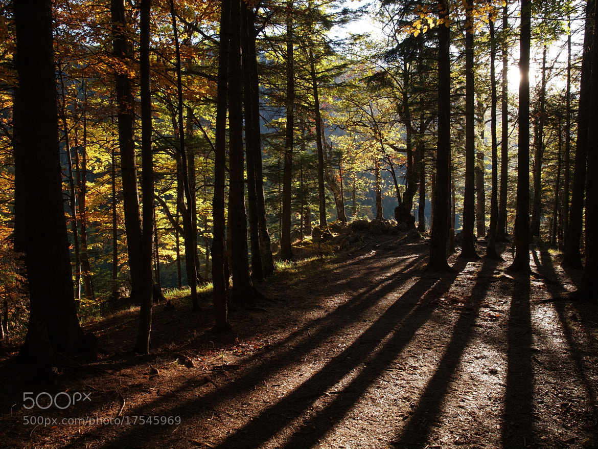 Photograph sunset and shadows by Paul Paun on 500px