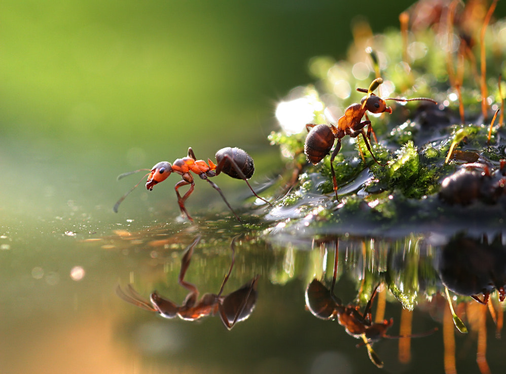 Photograph world of ants by Vadim Trunov on 500px