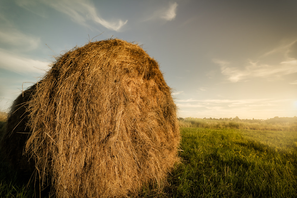 Photograph Straw bales by Daniel Pintaric on 500px