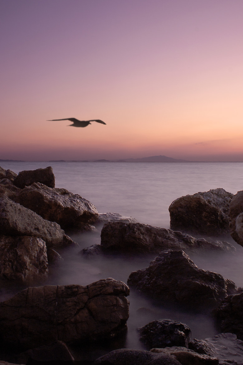 Photograph jonathan livingston by Turgut Özben on 500px