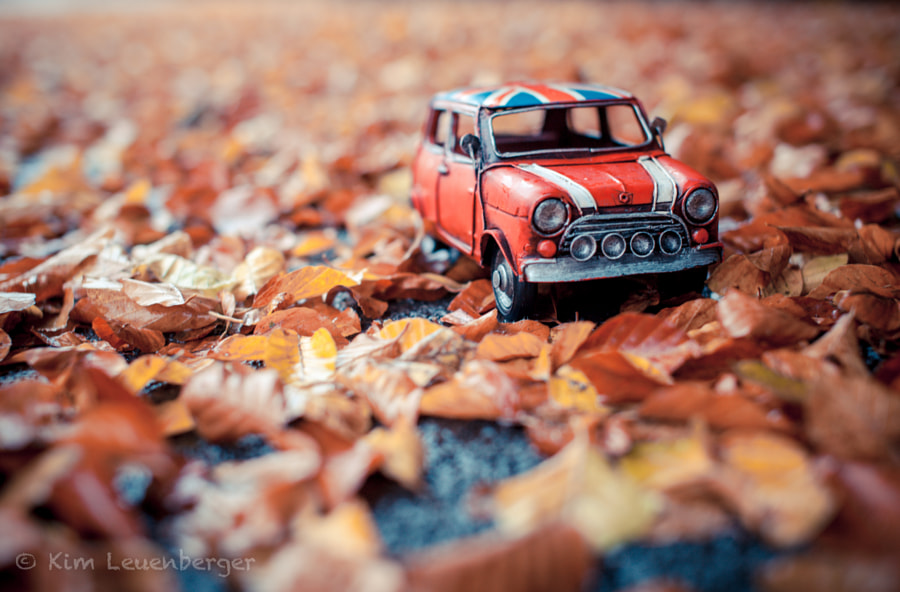 Autumn leaves... by Kim Leuenberger on 500px.com