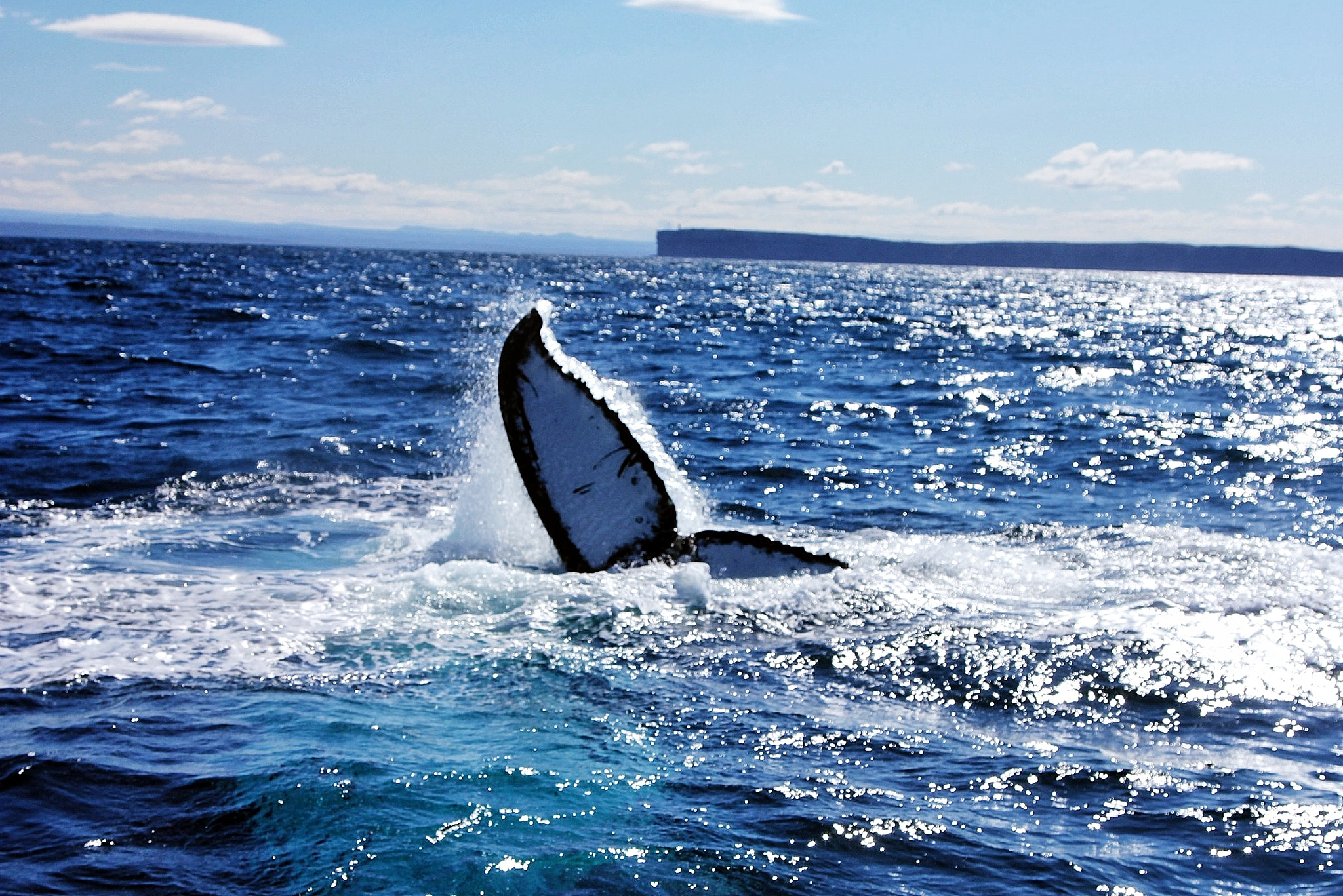 Photograph Humpback whale or Butterfly...? by Sumuhan Shan on 500px