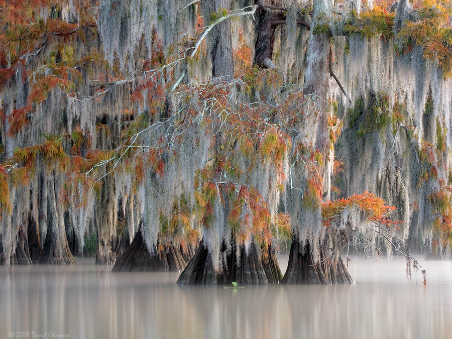 Photograph Fall Tapestry by David Chauvin on 500px