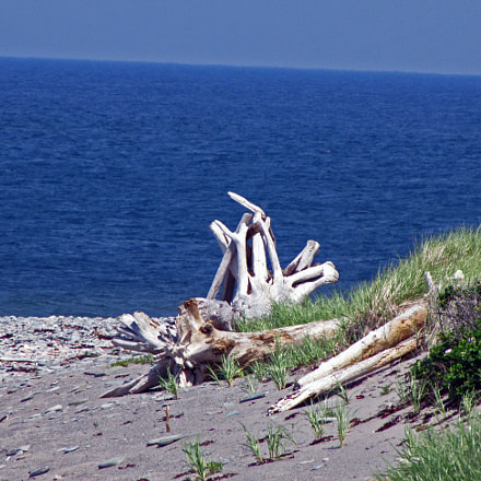 Driftwood on the Beach, Canon POWERSHOT SX20 IS