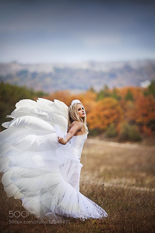 Photograph swan by Alena Kycher on 500px