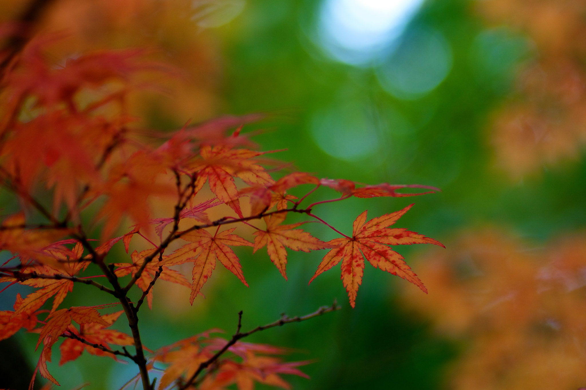 Photograph Autumn Leaves by Mitch Fujiwara on 500px