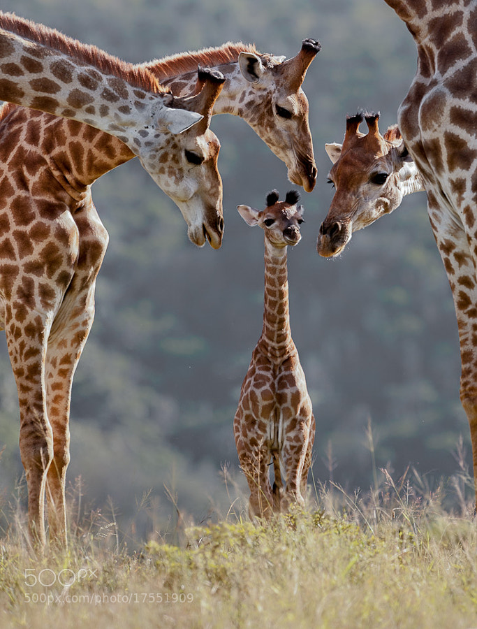 Photograph New Arrival by Brendon Jennings on 500px