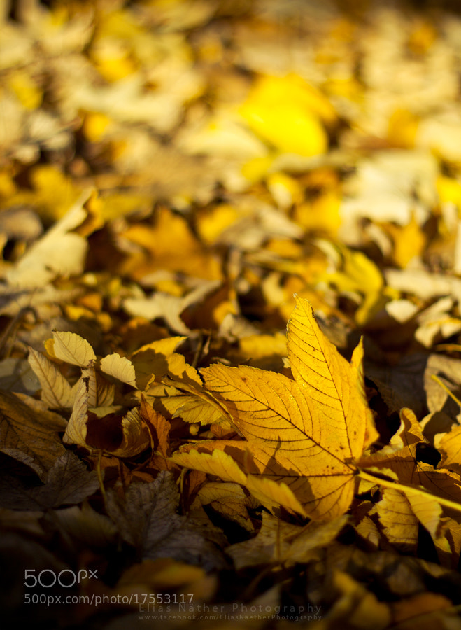 Photograph Autumn by Elias Näther on 500px