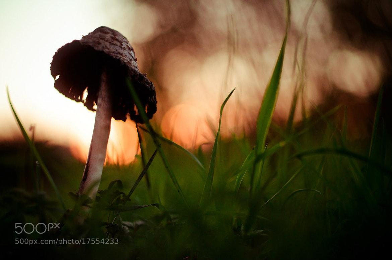 Photograph Fungi Gelios-81H (2) by Arseniy Anufriev on 500px