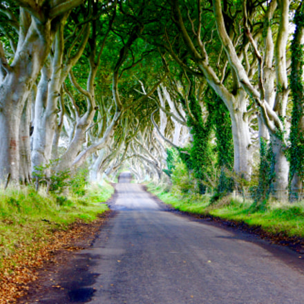 The Dark Hedges near, Sony NEX-5, Sony E 18-55mm F3.5-5.6 OSS
