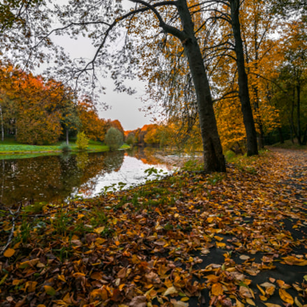 Autumn in Moscow, Canon EOS 6D, Canon EF 16-35mm f/4L IS USM