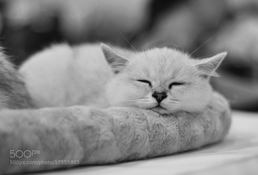 Need Some Sleep by Olga Kolousova
