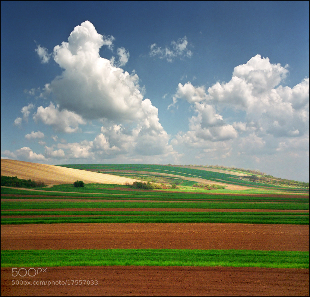 Photograph Colorful spring fields by Katarina Stefanović on 500px