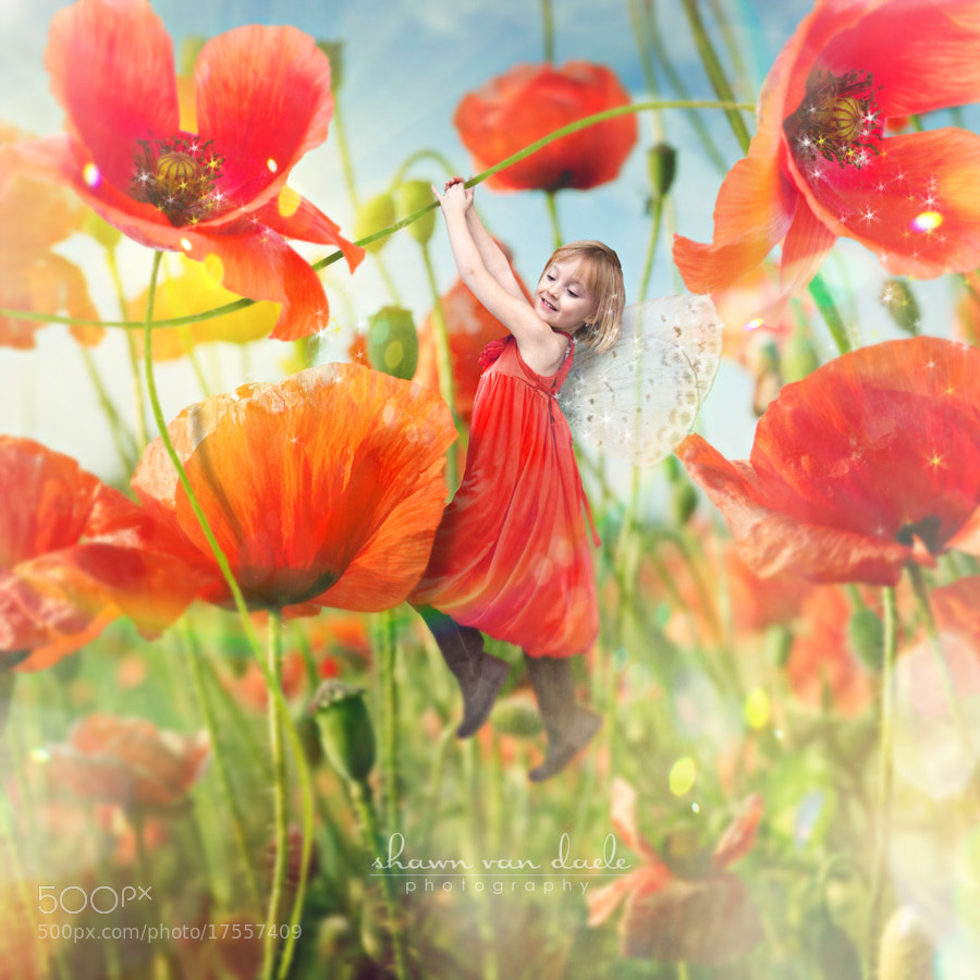 Photograph Naomi, Fairy Princess of Poppies by Shawn Van Daele on 500px
