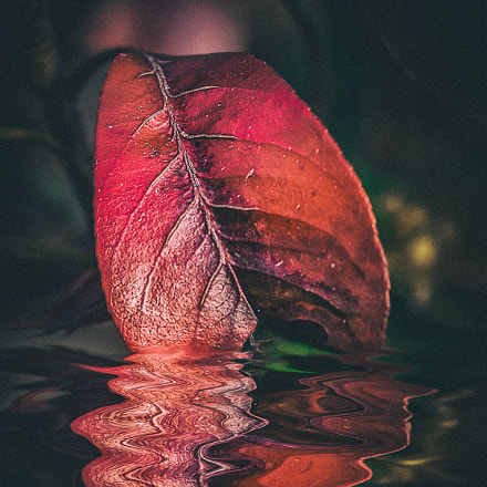 Red reflection, Canon EOS 5D MARK III, Canon EF 135mm f/2L