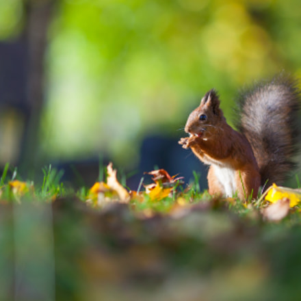 Me and my nuts!, Canon EOS 5D MARK II, Canon EF 135mm f/2L