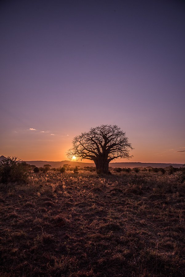 Baobab at Sunset by Joe Schmied on 500px.com
