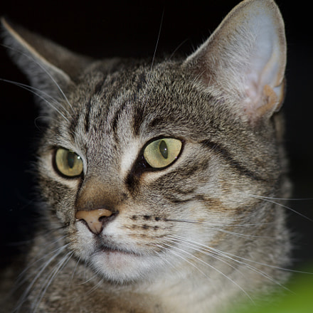 Cat on the other, Canon EOS 5D MARK III, Canon EF 300mm f/4L IS