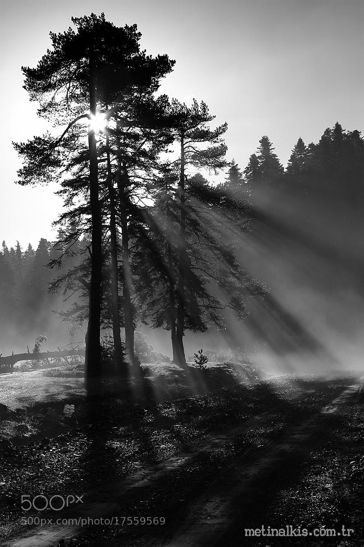 Photograph Sunlight is lifelight by Metin Alkış on 500px