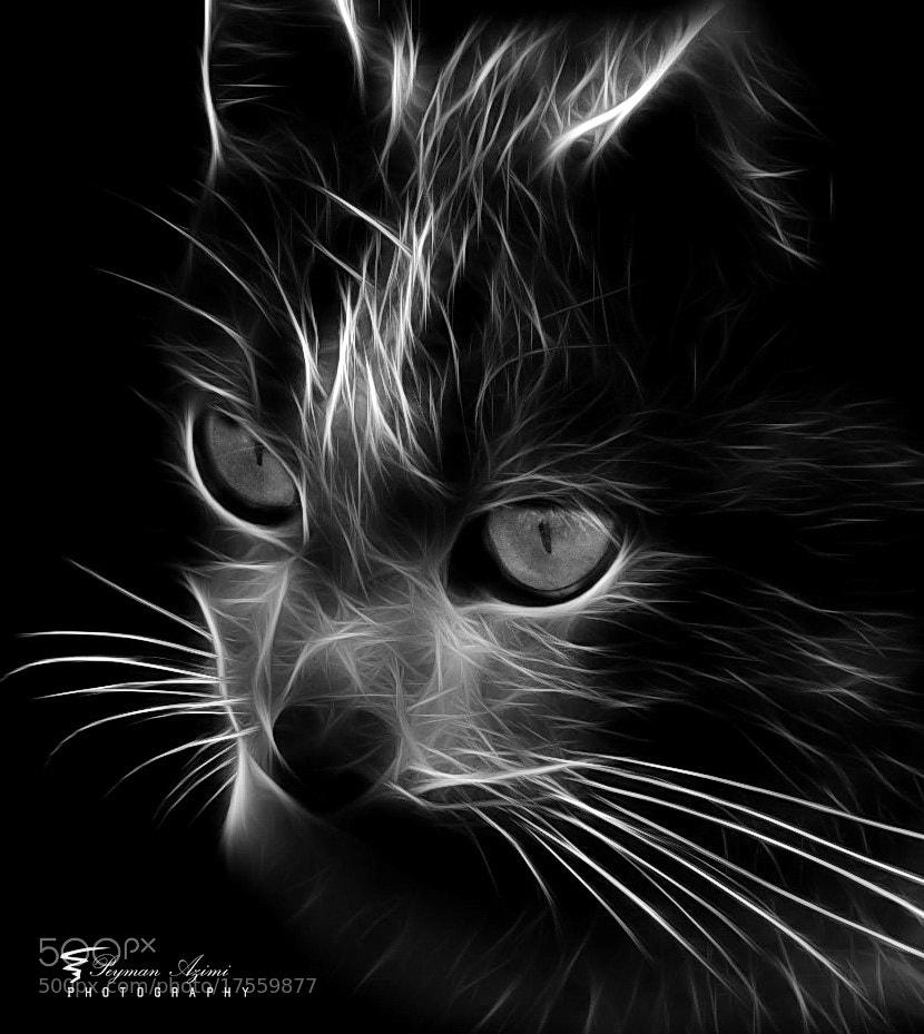 Photograph  (o o) by Peyman Az on 500px