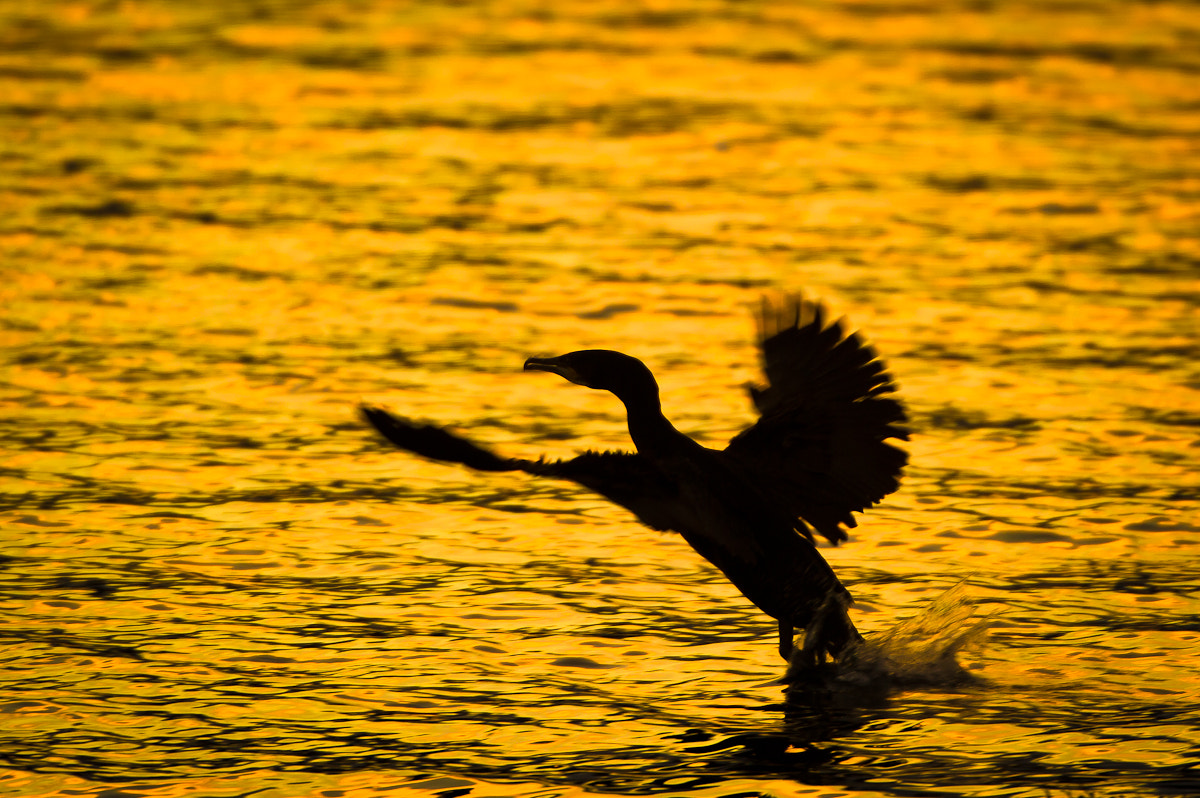 Photograph Bird in Evening light. by Geir Magne  Sætre on 500px